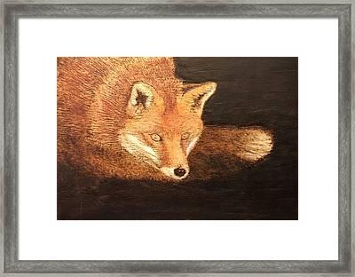 Fox Framed Print by Dominic Abela