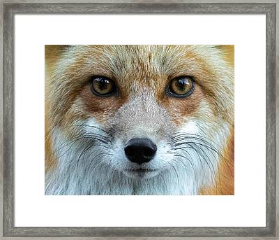 Fox Eyes Framed Print by Mindy Musick King
