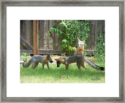 Framed Print featuring the photograph Fox Family by Deleas Kilgore