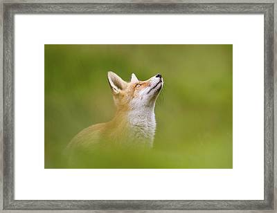 Fox Full Of Hope Framed Print by Roeselien Raimond