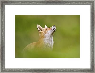 Fox Full Of Hope Framed Print