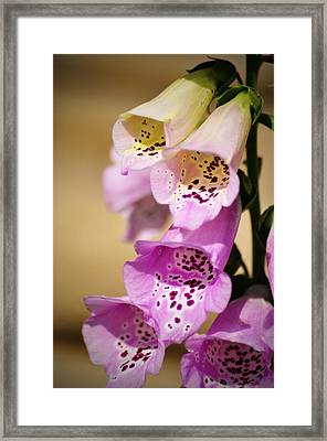 Fox Gloves Framed Print by Bill Cannon
