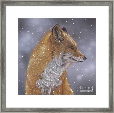 Fox In A Flurry Framed Print