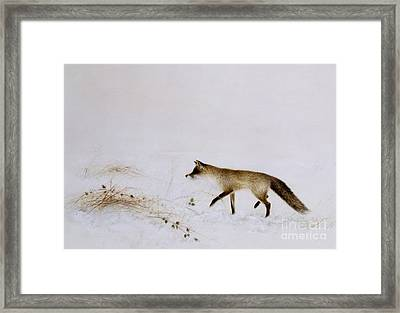 Fox In Snow Framed Print by Jane Neville