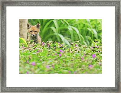 Fox In The Garden Framed Print by Everet Regal