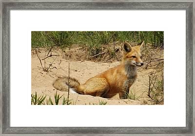 Fox In The Woods 2 Framed Print