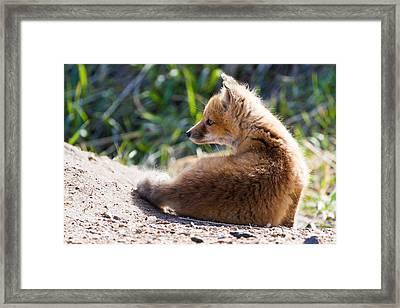 Fox Kit #2 Framed Print by Mindy Musick King