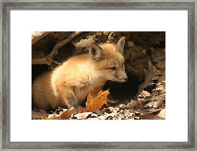 Framed Print featuring the photograph Fox Kit At Entrance To Den by Doris Potter