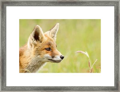 Fox Kit Dreams Framed Print by Roeselien Raimond