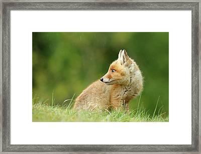 Fox Kit In A Summer Shower Framed Print
