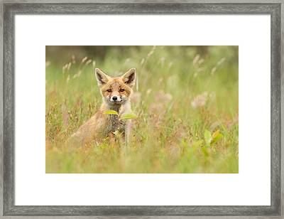 Fox Kit In The Filed Framed Print by Roeselien Raimond