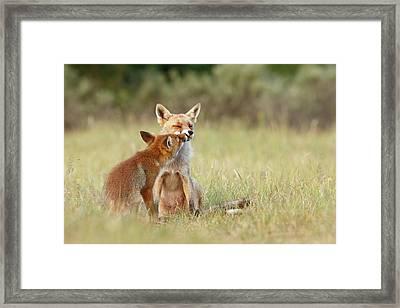 Fox Love Series - Kiss Framed Print by Roeselien Raimond