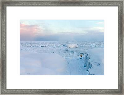 Fox Of The North I Framed Print by Mary Amerman