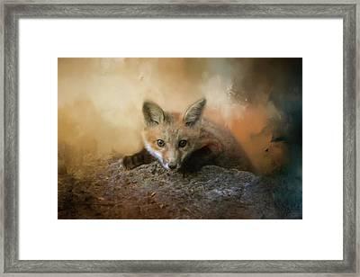 Fox On The Rocks Framed Print