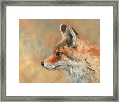 Fox Portrait Framed Print by David Stribbling