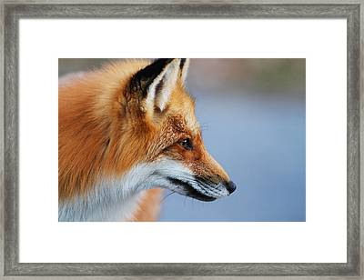 Fox Profile Framed Print