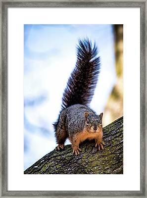 Fox Squirrel On Alert Framed Print