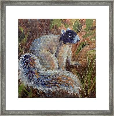 Fox Squirrel Framed Print