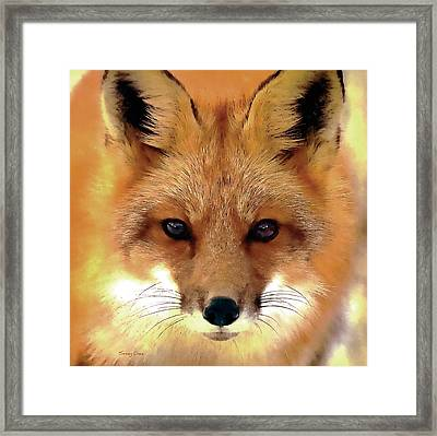 Fox Framed Print by Stacey Chiew