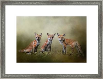 Fox Trio Framed Print