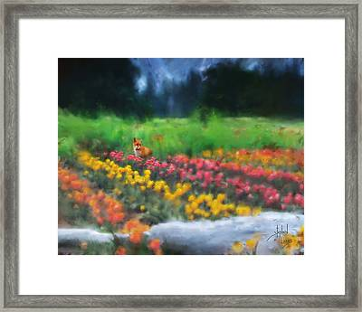 Fox Watching The Tulips Framed Print by Stephen Lucas