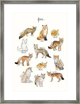 Foxes Framed Print by Amy Hamilton