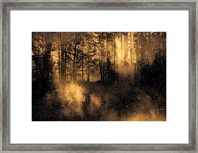 Foxfire Framed Print by Theresa Campbell