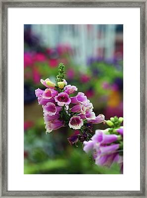 Foxglove 1154 H_2 Framed Print
