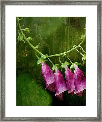 Foxglove Framed Print by Bonnie Bruno