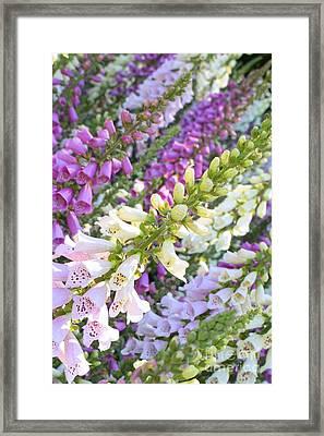 Foxglove Card Framed Print by Carol Groenen