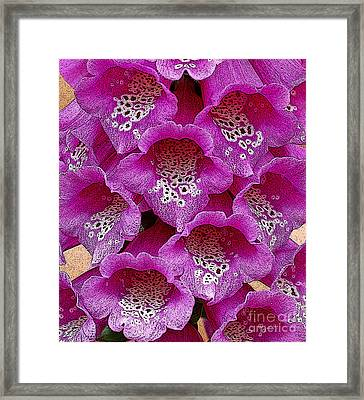 Foxglove Framed Print by Diane E Berry
