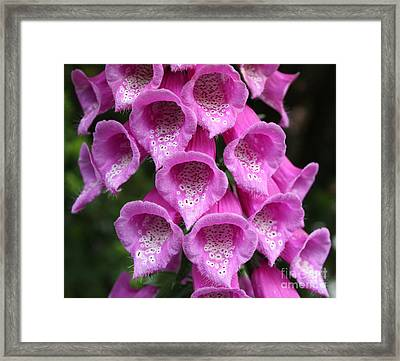 Framed Print featuring the photograph Foxglove by Edward R Wisell