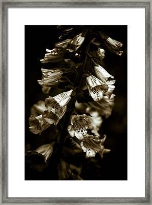 Foxglove Flowers Framed Print by Frank Tschakert