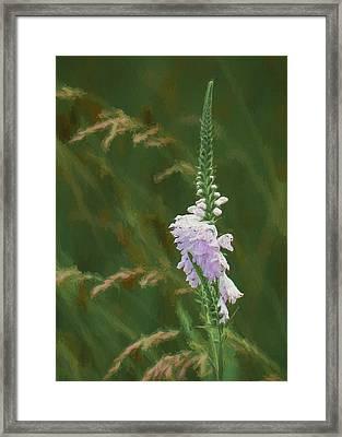 Foxglove In Bloom Framed Print by James Barber