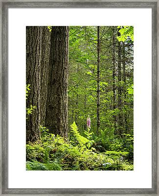 Framed Print featuring the photograph Foxglove In The Woods by Jean Noren