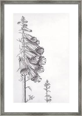 Foxglove Framed Print by Janel Bragg