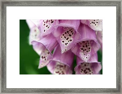 Foxglove Macro Framed Print