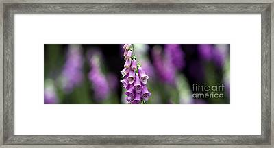 Foxglove Panoramic Framed Print by Tim Gainey