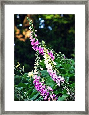 Foxglove Stalks Framed Print by Sarah Loft