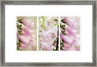 Foxglove Triptych Framed Print by Jessica Jenney