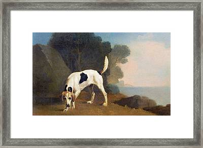 Foxhound On The Scent Framed Print by George Stubbs