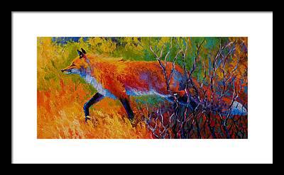 Coyote Framed Prints