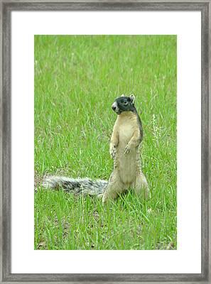 Foxy Framed Print by Adele Moscaritolo
