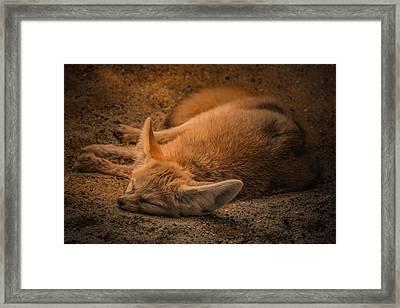 Foxy Framed Print by Chris Fletcher