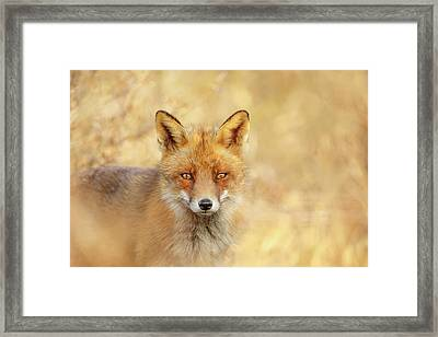 Foxy Faces Series- That Look Framed Print by Roeselien Raimond