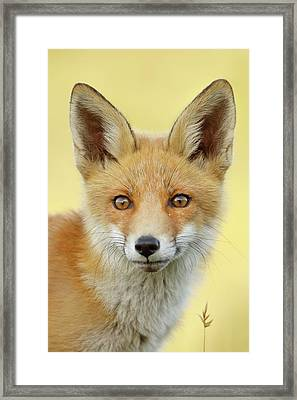 Foxy Faces Series- Young And Eager Fox Framed Print