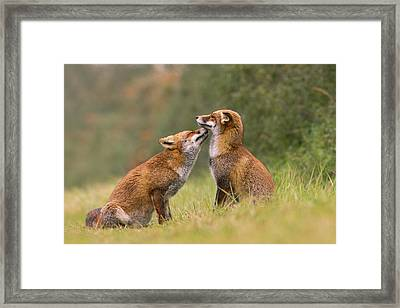 Foxy Love- Kiss Framed Print by Roeselien Raimond