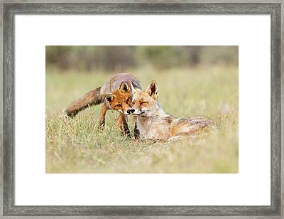 Foxy Love - Mother Fox And Fox Kit Framed Print by Roeselien Raimond
