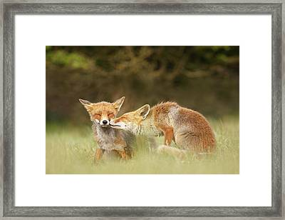 Foxy Love Series - Kiss Framed Print