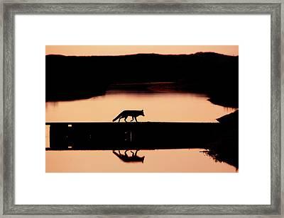 Foxy Nights - Red Fox Silhouette Framed Print